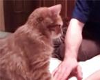 这是只有强制症的猫咪